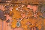 Rust Antartica 1-00117
