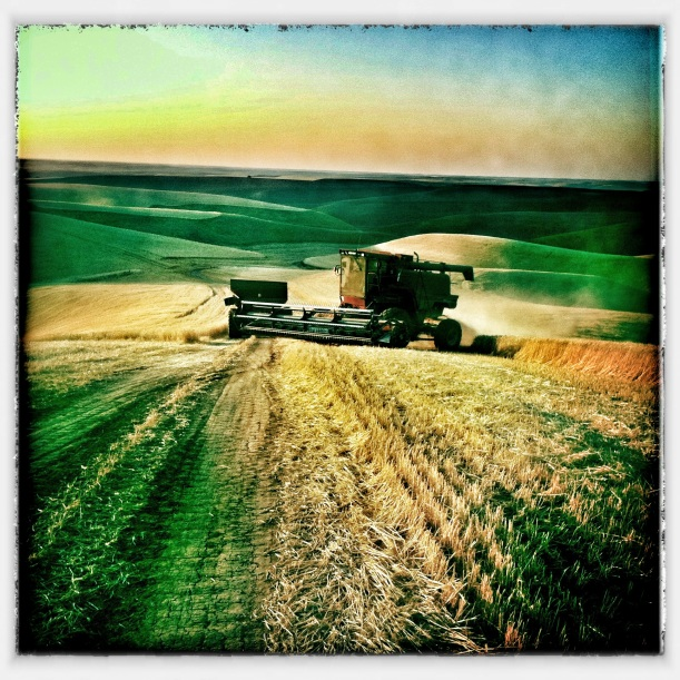 Harvest Time - Palouse