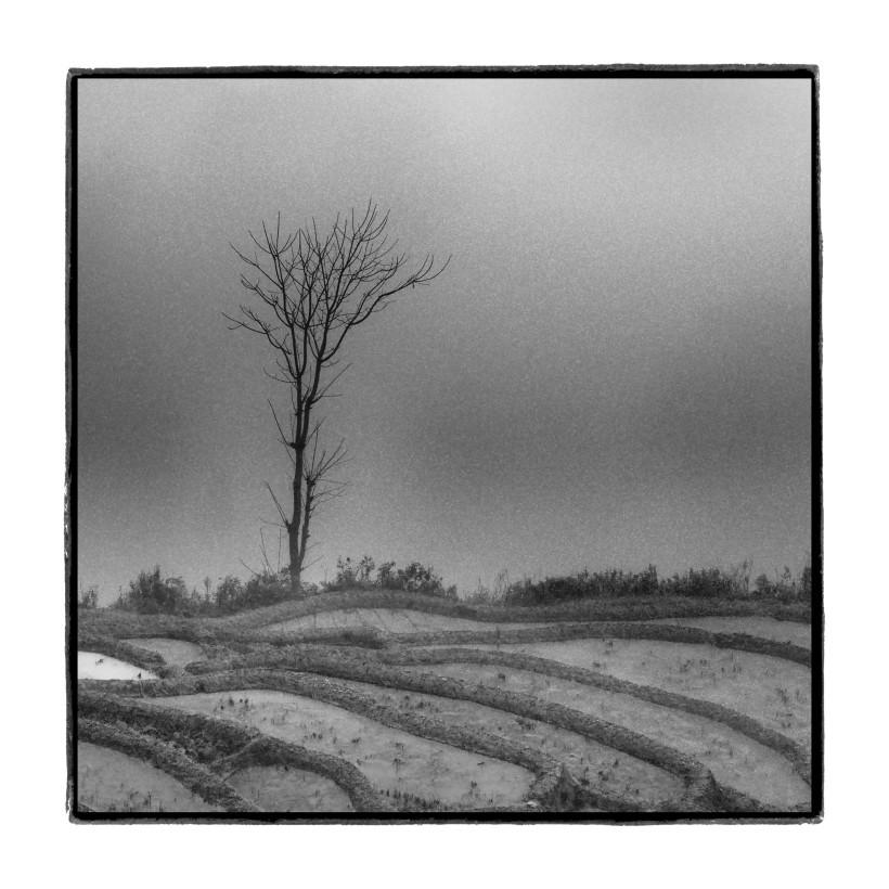 Tree, Fog and Field, China