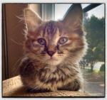 Pixel, My Cat at 8 weeks old