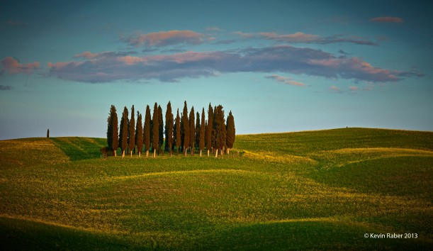 Trees In Tuscany