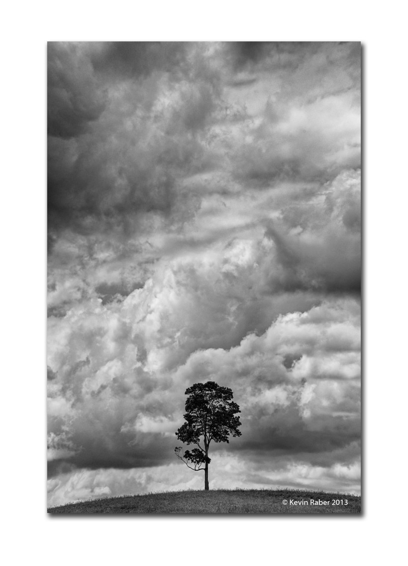 Lonely Tree, Clearview, Ontario