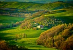 CF001587  Tuscany 2013 T 2