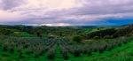 _DSF7467 Tuscany PIODAS 2013 T 2