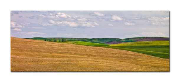 Simple Landscape, Palouse, WA