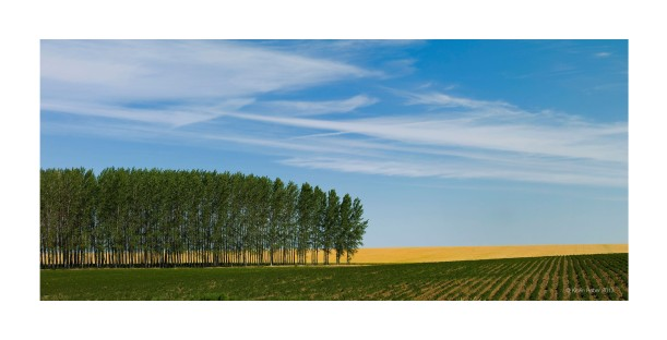 Palouse Trees