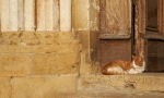 _S058146 Tuscany PIODAS 2013 T 2