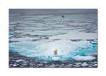65 polar bear 4409