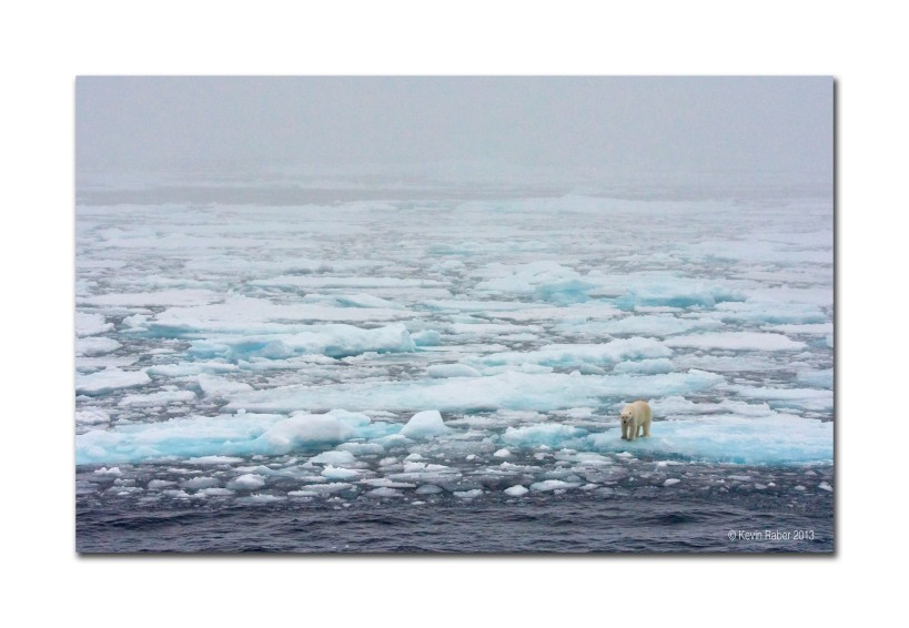 Polar Bear at the edge.  Arctic Circle