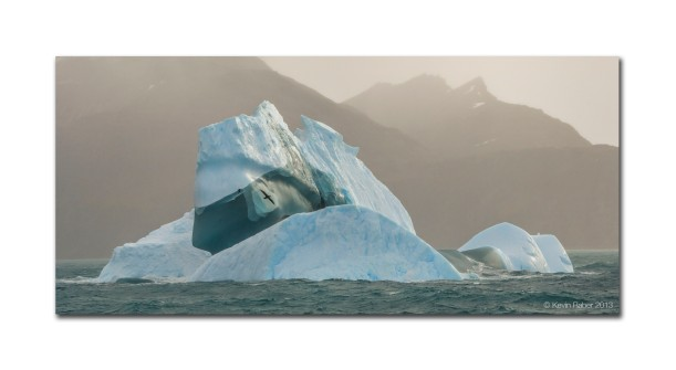 Bird and Iceberg, Antarctica