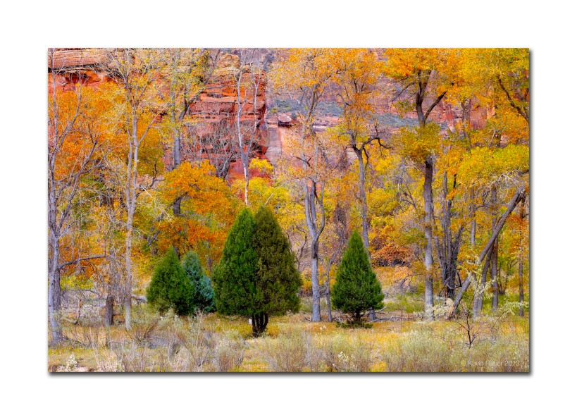 Fall Colors In Zion National Park  2011