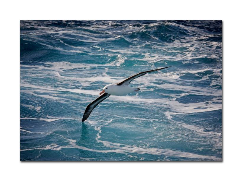 2 bird off boat 4