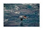 2 bird off boat 6