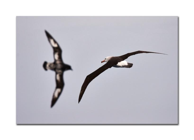 2 bird off boat 8