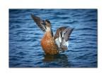 2 flying duck 2