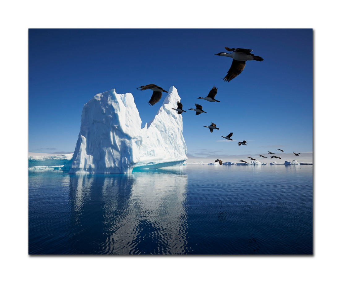 Birds and Icebergs, Antarctica, November 2013