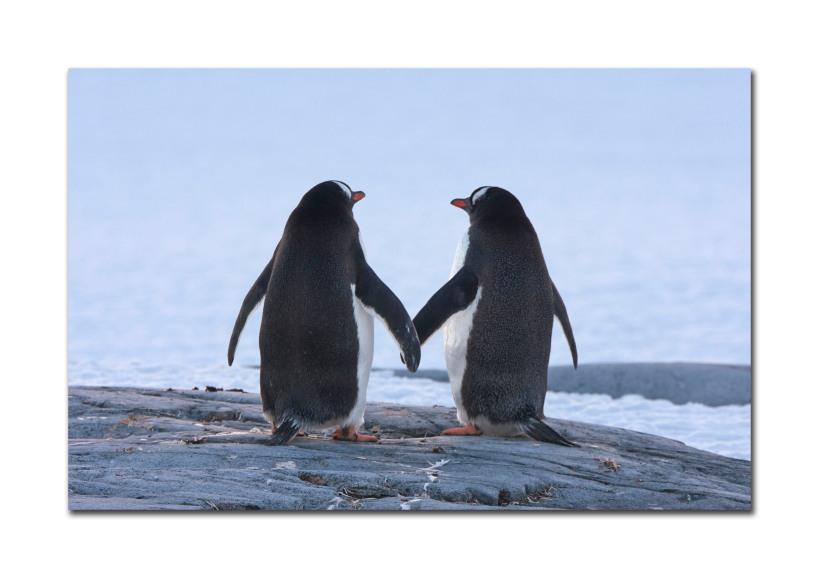 penguins 23