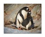 penguins 25
