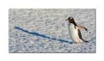 penguins 28