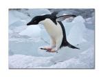 penguins 39