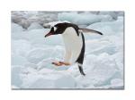 penguins 41