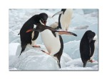 penguins 42