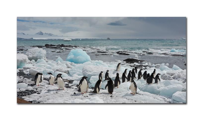 penguins 44