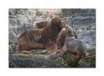 sea lions 5