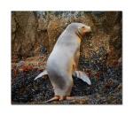 sea lions 9
