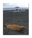 seal and boat