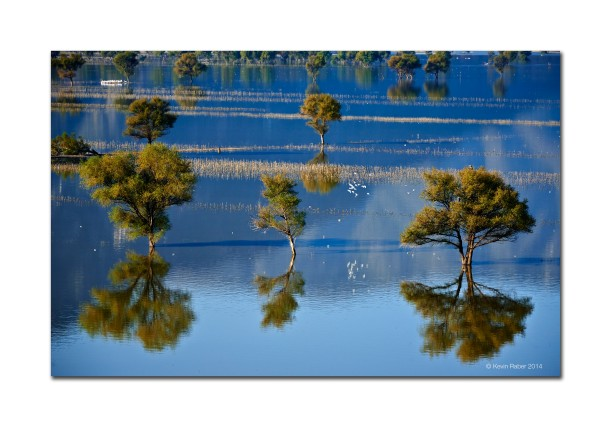 Trees In A Lake, Mexico