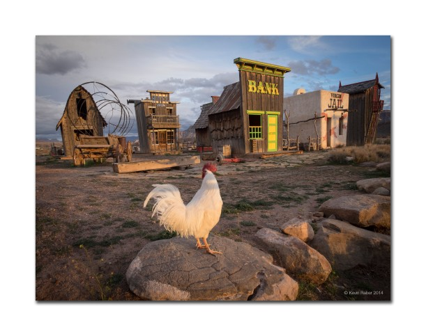 Rooster and The Old Town