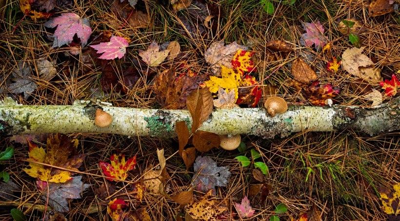 Fall Colors, Algonquin NP, Canada