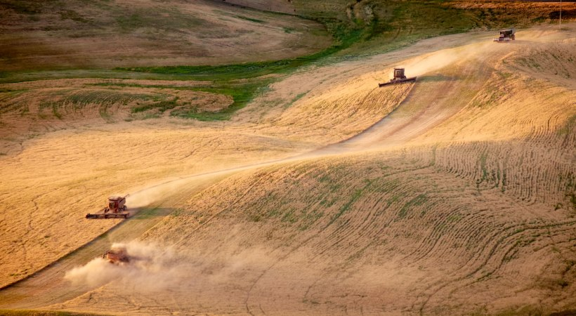 Harvest In The Palouse