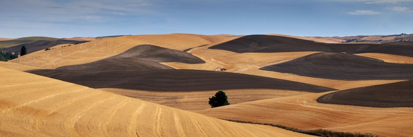 Rolling hills in the Palouse
